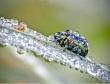 Bộ ảnh macro tuyệt đẹp về thế giới côn trùng
