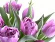 Mang những bông hoa tuyệt đẹp lên Windows để mừng ngày 8/3