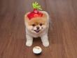 """Gặp chú chó đáng yêu, """"ngôi sao"""" trên Internet"""